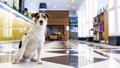 Hotel in Helsinki where pets are welcome